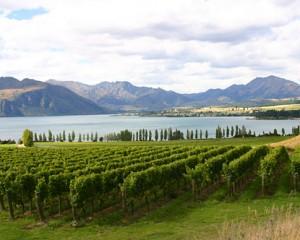 NZ-PHOTO