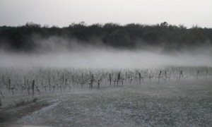 The Chateau de Castelneau vineyard during the hailstorm